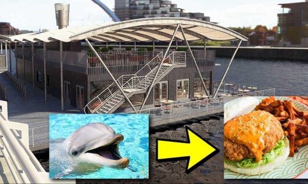 Controversial sea mammal café to open in Nanaimo