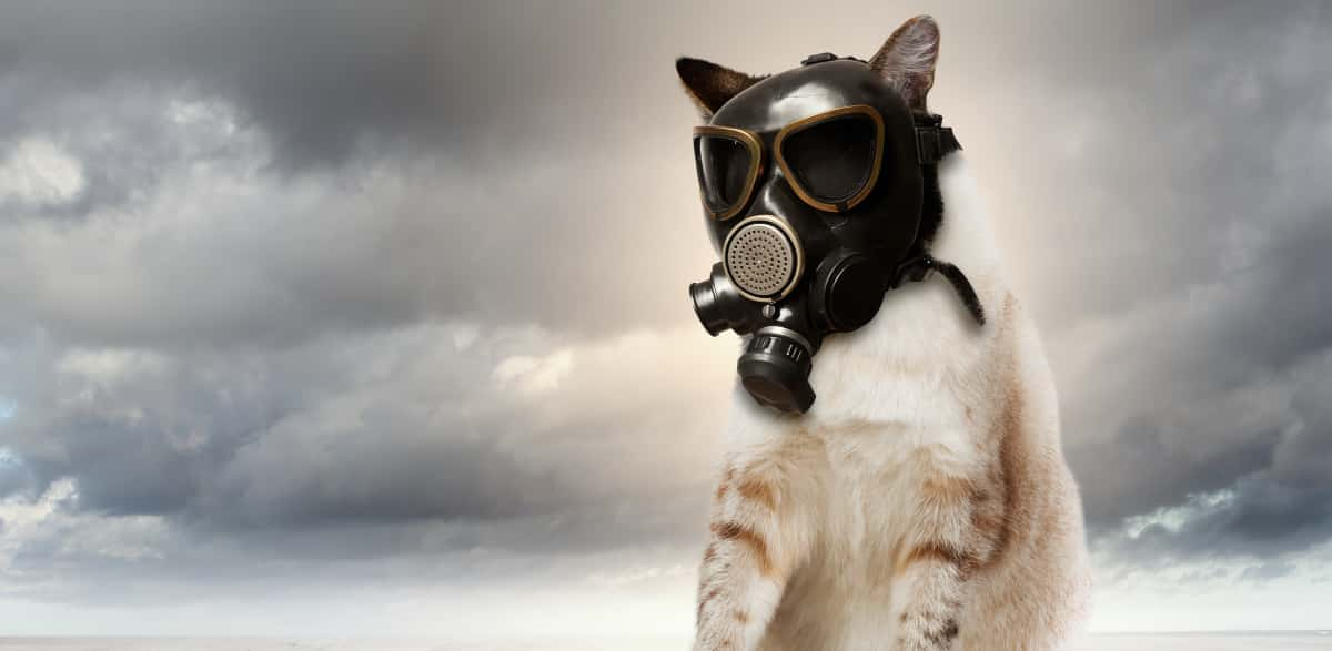 Island Cats Refusing to Share Masks with Humans
